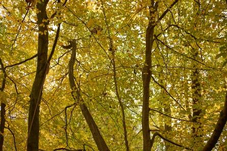Autumn2 4