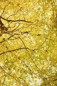 Autumn2 5