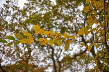 Autumn2 6