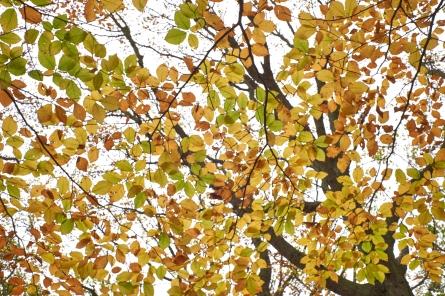 Autumn2 7