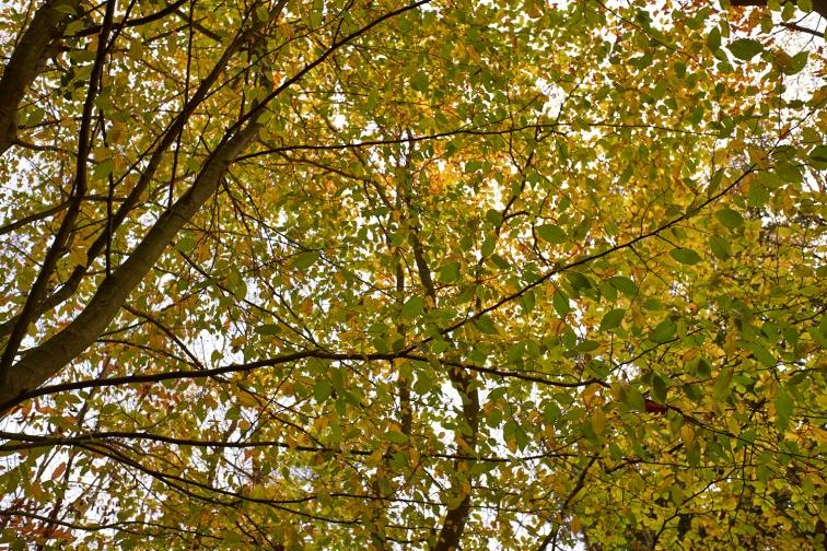 Autumn2 9